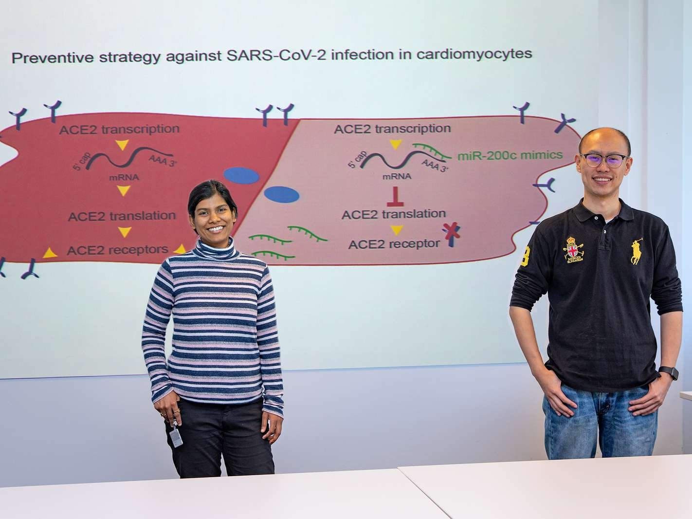 Shambhabi Chatterjee, PhD, (left) and Dongchao Lu in front of the schematic illustration of the blockage of the pathway for the coronavirus to enter the heart muscle. Copyright: Karin Kaiser/MHH